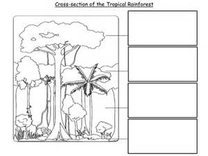 worksheets layers of the rainforest worksheet chicochino