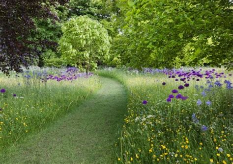 wildflower garden ideas best 25 meadow garden ideas on flower