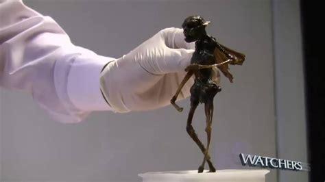 imagenes hadas reales 191 hada real encontrada y grabada en m 201 xico youtube
