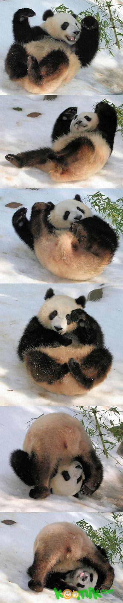 Komik Panda 1 3 oyuncu panda komik resim