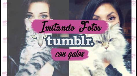 imagenes tumblr gatitos imitando fotos tumblr con gatos petgoals just fergie
