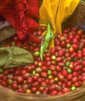 que se siembra en septiembre facilisimocom mejores 37 im 225 genes de minigu 237 as de siembra vanitatis tendencias los mejores caf 233 s mundo todo el aroma y sabor