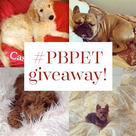 Dogs For Giveaway - it s a pbpet giveaway for national dog day