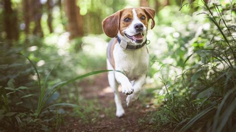 state with the most dog owners 100 which state has the most dog owners per capita