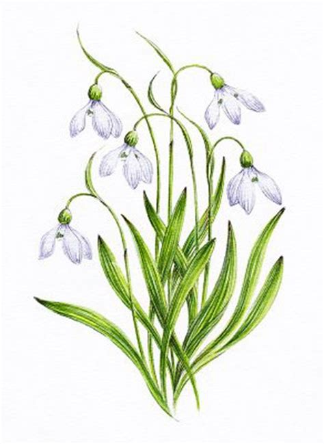 january birth flower tattoo snowdrop snowdrop image search results