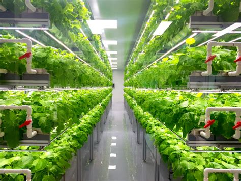 economics  local vertical  greenhouse farming