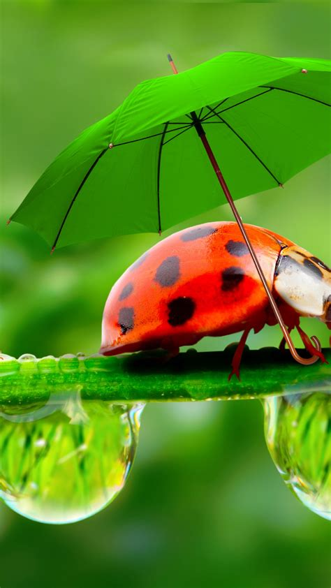 wallpaper ladybug red green grass umbrella animals