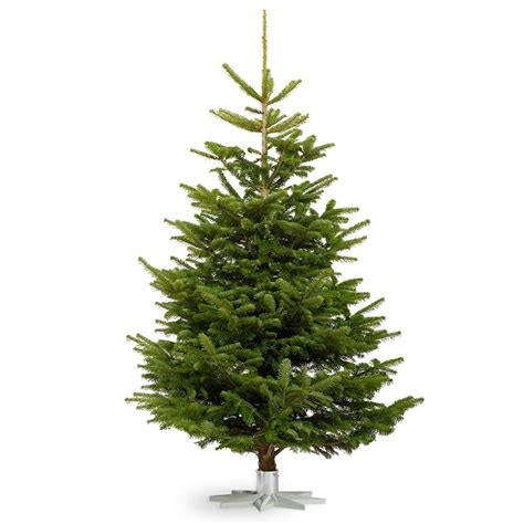 nordmann fir real christmas tree fresh cut no mess 4 10ft