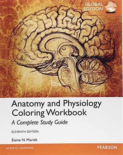 anatomy and physiology coloring workbook chapter 7 journey seller profile omega bookseller
