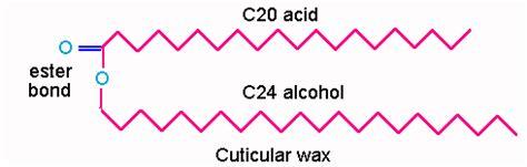 carbohydrates generally a molecular formula biochemistry i