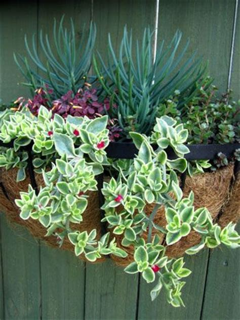 succulent hanging basket hanging basket that will