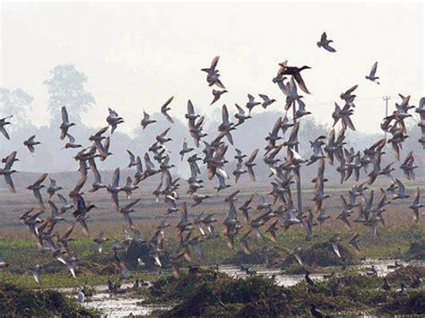 siberian birds leave pakistan after winter migration