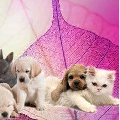 renella alimenti da evitare gattocicova cure naturali per cani e gatti