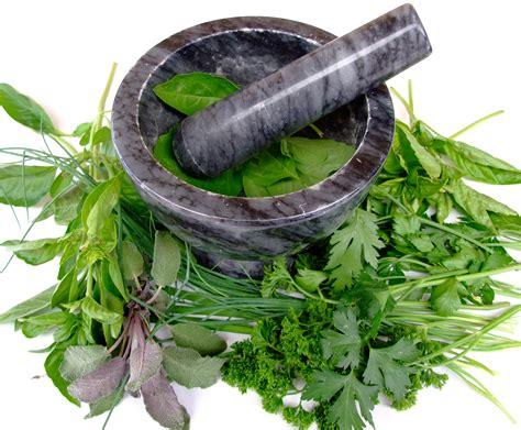 imagenes de limpias espirituales top 12 plantas medicinales 1001 consejos