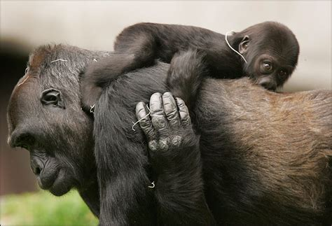 photography moments animal mother  baby