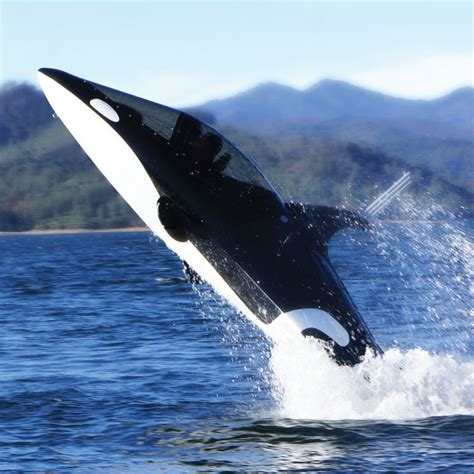 the shark names the submarine whale watching boat seabreacher y personal submarine looks like a killer whale