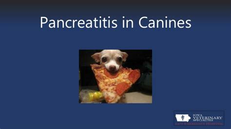 causes of pancreatitis in dogs canine pancreatitis