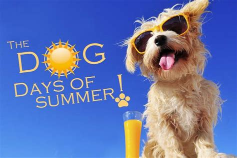 dogs days are 2015 august