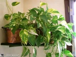 plantes vertes interieur faciles entretien design de