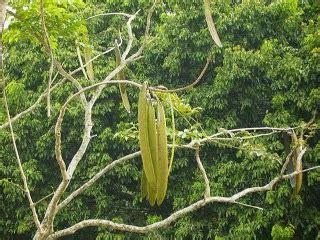 Produk Istimewa Bralette Bunga 8557 produk istimewa qalbun rahmah teras exotik pokok beko
