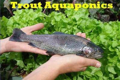 backyard fish farming trout trout the o jays and aquaponics on pinterest