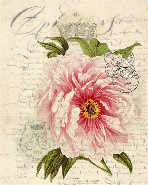 botanical print wallpaper botanical rose print pillow note cards tea towel