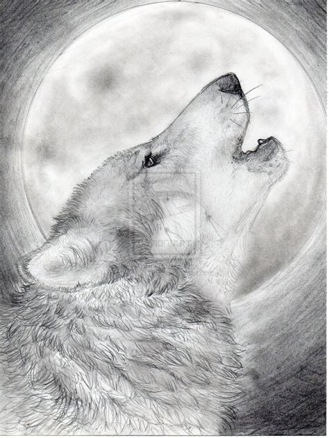 Sketches Wolf by Wolf Pencil Drawing Sketches Collection Vudesk