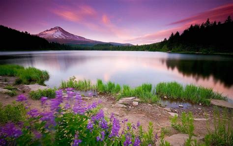 Download Nature HD Wallpapers for android, Nature HD