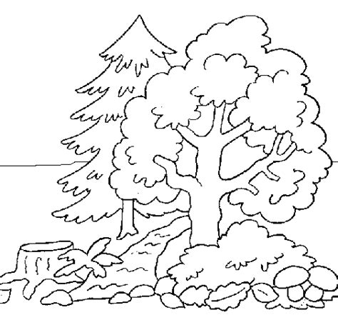 Forest Scene Coloring Pages Coloring Pages Forest Coloring Page