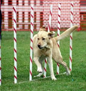 rescue remedy for dogs rescue remedy for dogs dose my pet