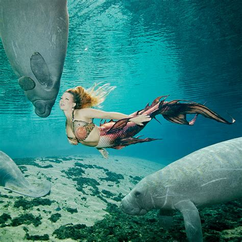 the mermaid s andrew brusso and weeki wachee s 2014 calendar i am a