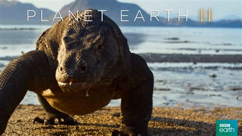 bbc earth gif find share  giphy