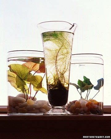 how to make your own indoor water garden sustainable