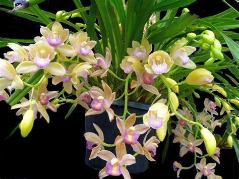 Jenis Pot Anggrek 3 orchids kiyanti2008 s weblog