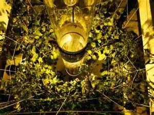Full Spectrum Light Bulb Buddha Box 5 X 5 Vertical Grow Tent Kit Review