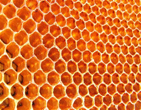 Honey Comb Honeycomb 17 fascinating beehive and honeycomb pictures