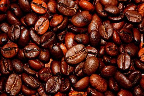 Kopi Coffee Bean manfaat sehat kopi bagi kesehatan tubuh yang perlu diketahui ragamartikelunik