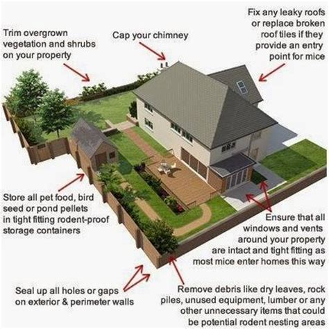rodent proofing your home www tidyhouse info