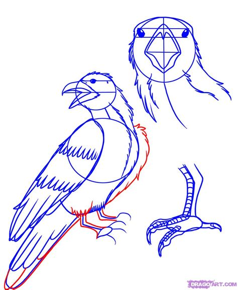 tutorial drawing online how to draw a raven step by step birds animals free
