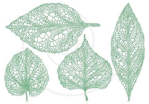 printable skeleton leaves green vein leaves skeleton leaf silhouette spring by illustree