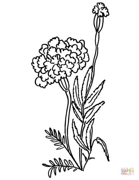 marigolds coloring page free printable coloring pages