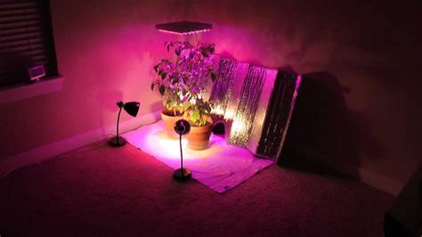 ghost peppers growing indoors  artificial light youtube