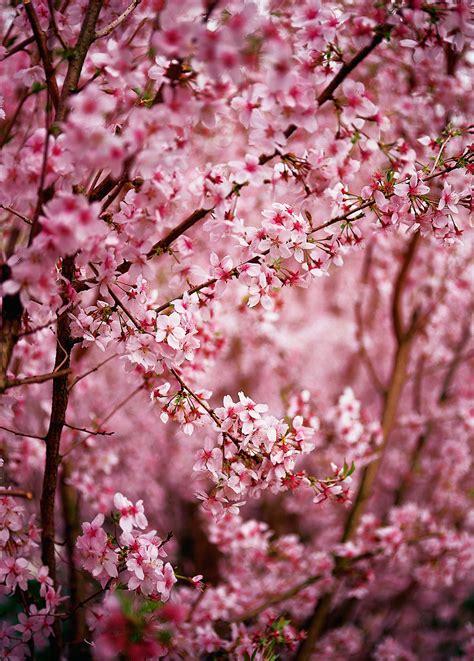 imagenes de paisajes rosas vinilos de paisajes flores rosas viniliza