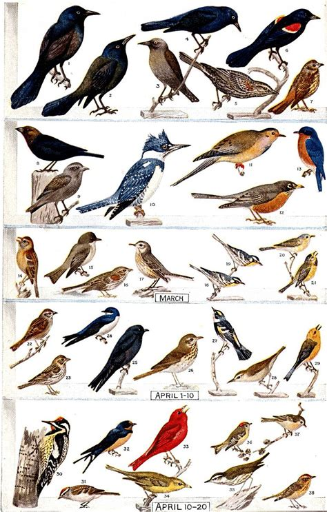 top 28 nc bird identification back yard wild birds in