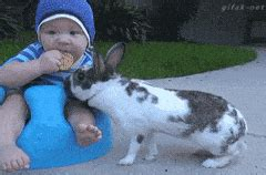 rabbit bathroom gif the hippo gifs search find make share gfycat gifs