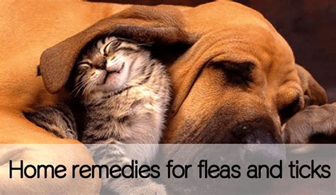 itch away home remedy for ticks and fleas