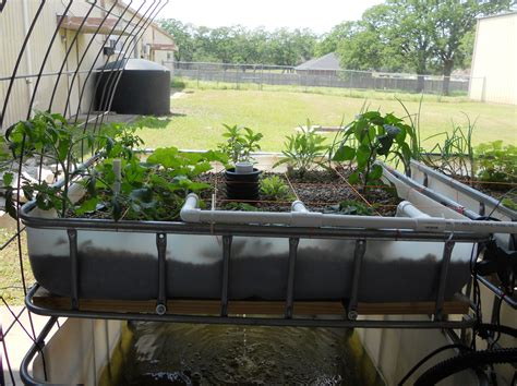 aquaponic backyard garden aquaponics new gardening suggestions from