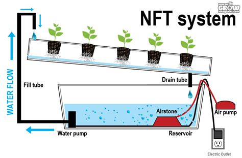 Nft Hidroponik hydroponic growing systems