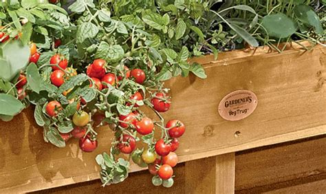 small veg garden ideas small vegetable garden small vegetable garden ideas