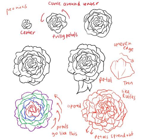pattern drawing tutorial drawn peony easy pencil and in color drawn peony easy